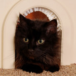 20 types of Cat doors
