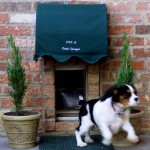 10 Options of Dog Doors