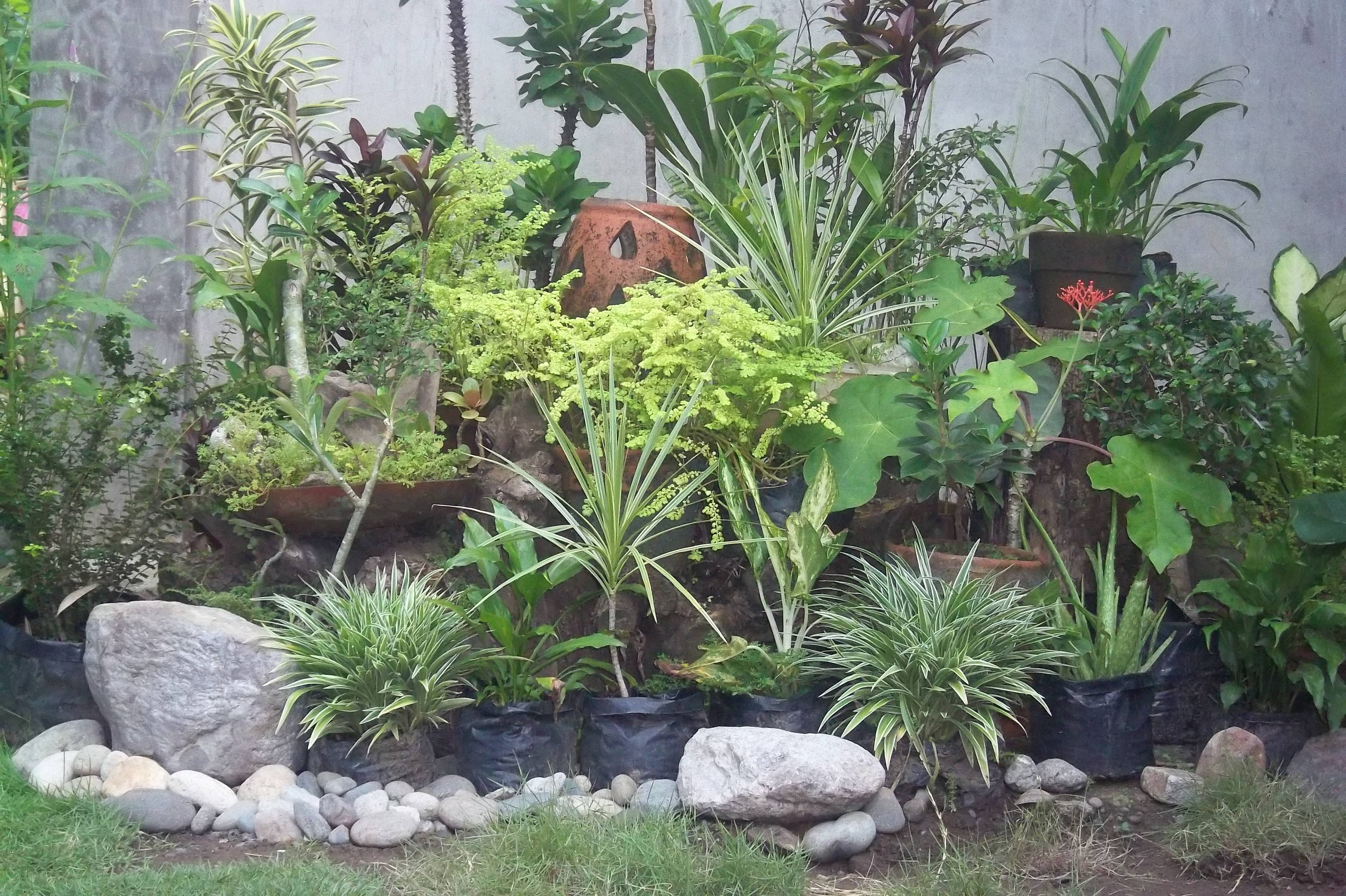 20 facts to know about flowers and plants for rock gardens for Rock garden designs