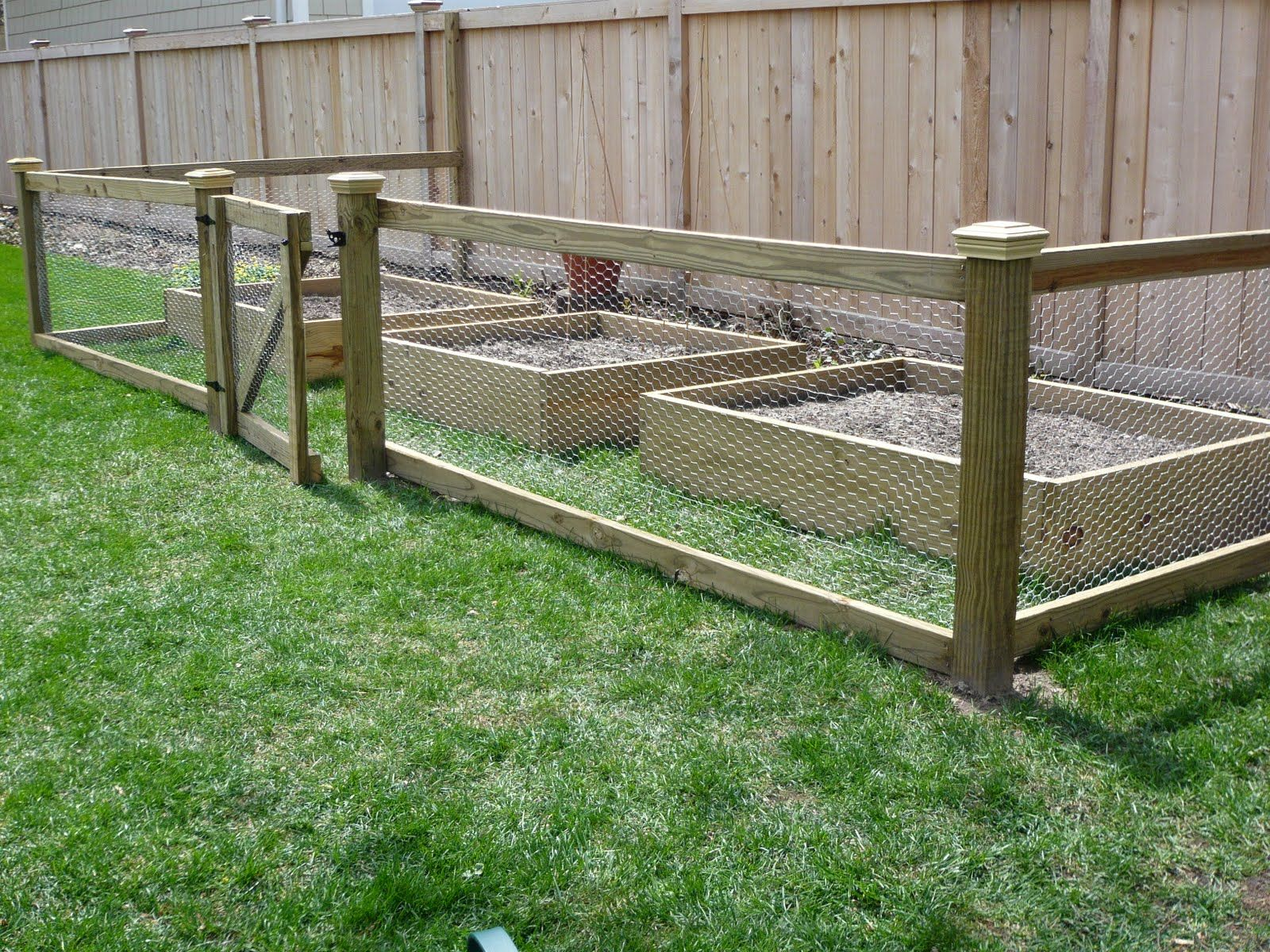 Things to know about vegetable garden fence chicken