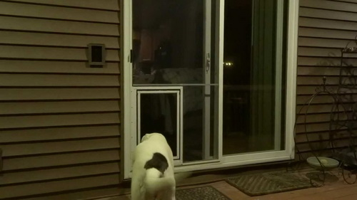 Dog-door-for-screen-door-photo-15