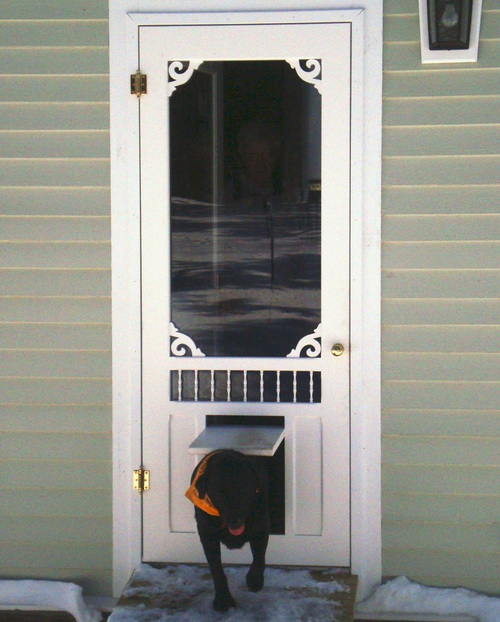 Dog-door-for-screen-door-photo-2