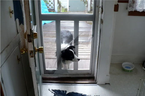 Dog-door-for-screen-door-photo-24