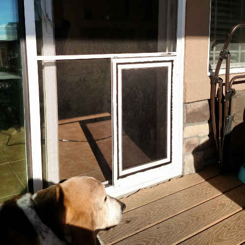 How To Train Small Dog To Use Doggy Door