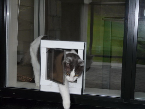 glass-dog-door-photo-17