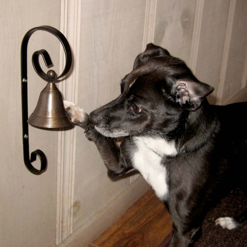Dog bell for door
