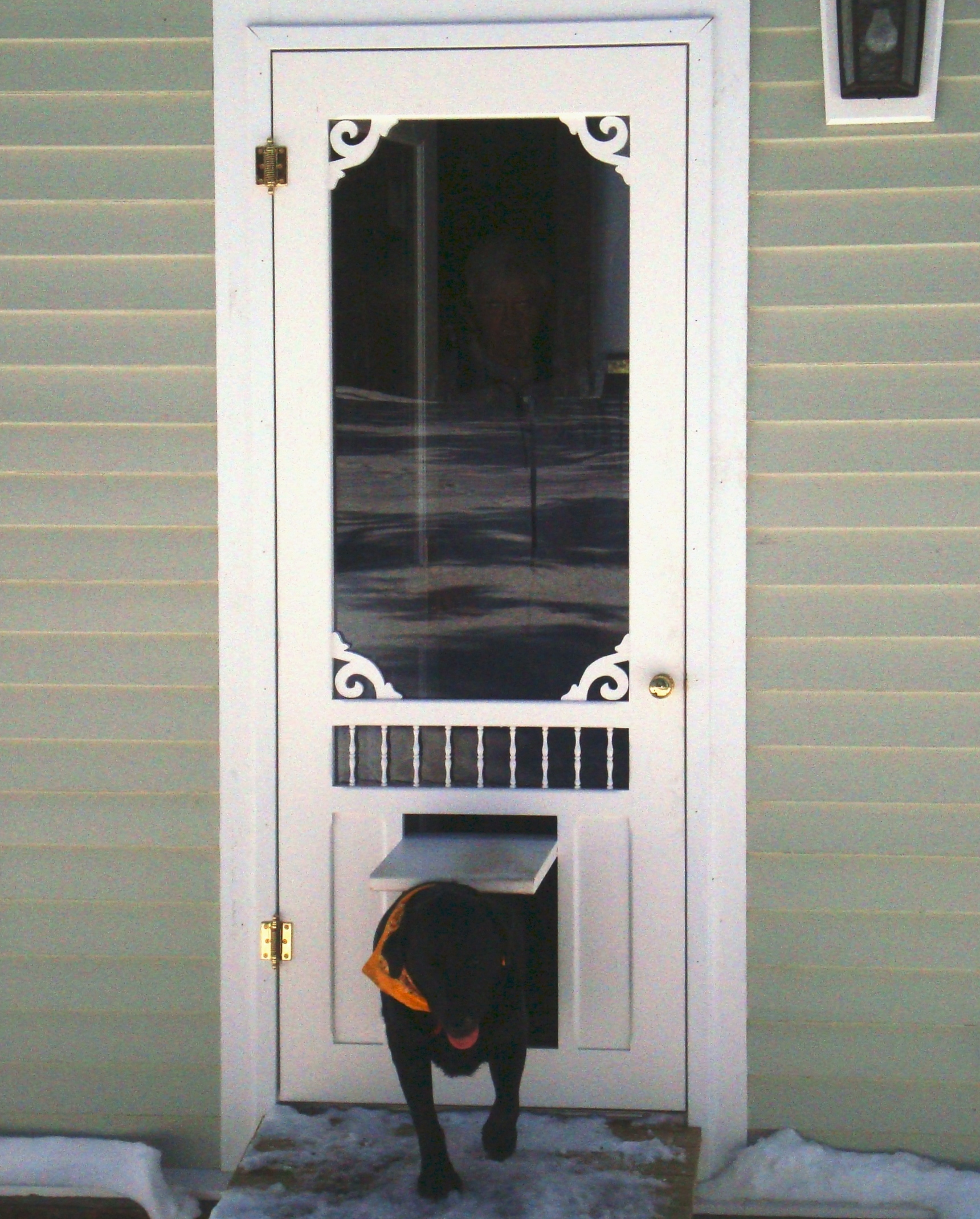 20 things you should to know about dog screen door for Interior screen door