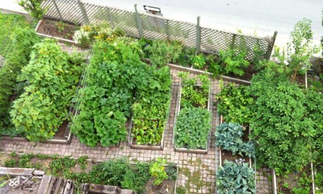 creating an urban vegetable garden photo - 5