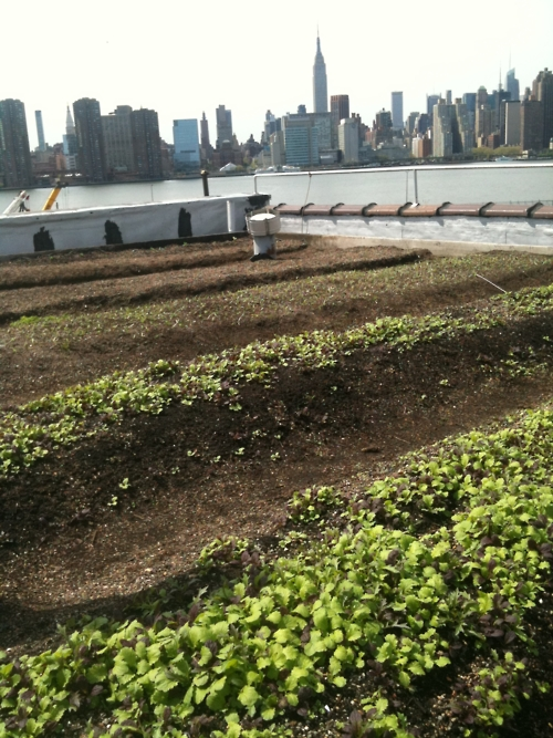 eagle street rooftop garden photo - 4