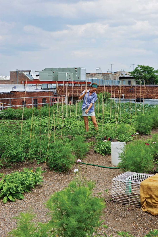 eagle street rooftop garden photo - 6