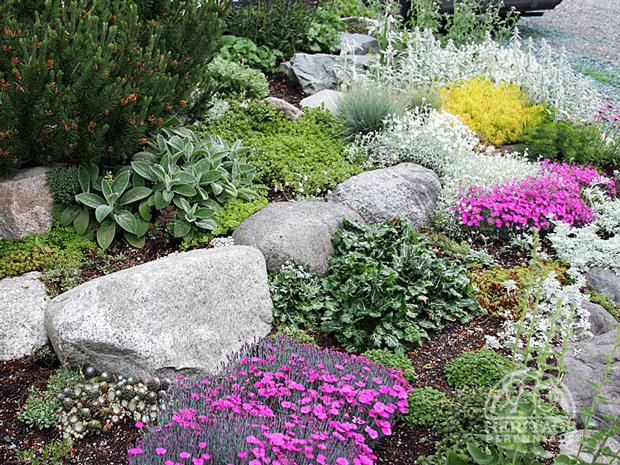 flowers and plants for rock gardens photo - 2