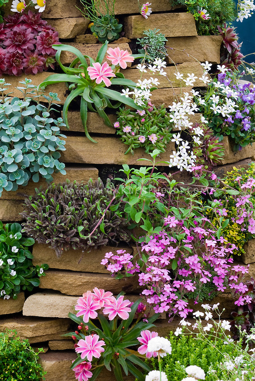 20 facts to know about flowers and plants for rock gardens for Garden plant information