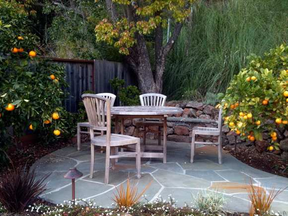 garden design ideas dogs photo - 2