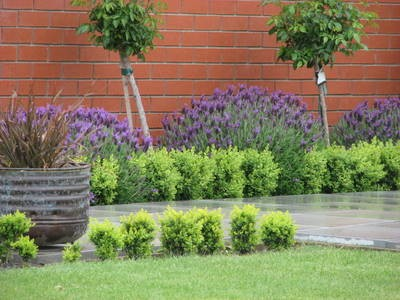 garden design ideas lavender photo - 2