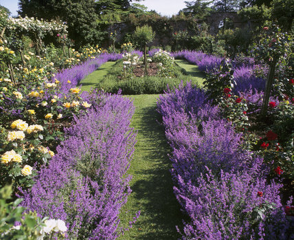 garden design ideas lavender photo - 3