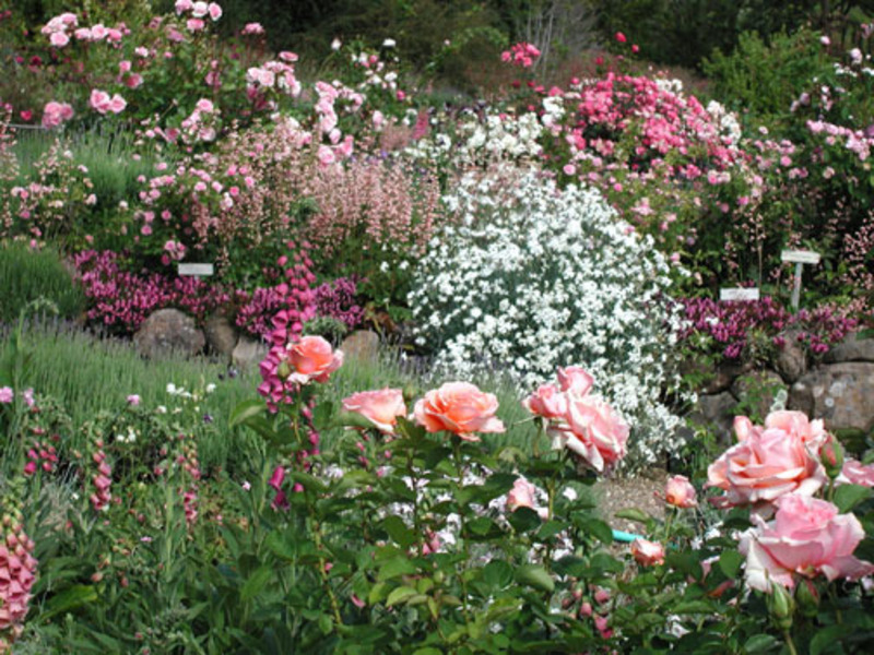 garden design ideas roses photo - 2