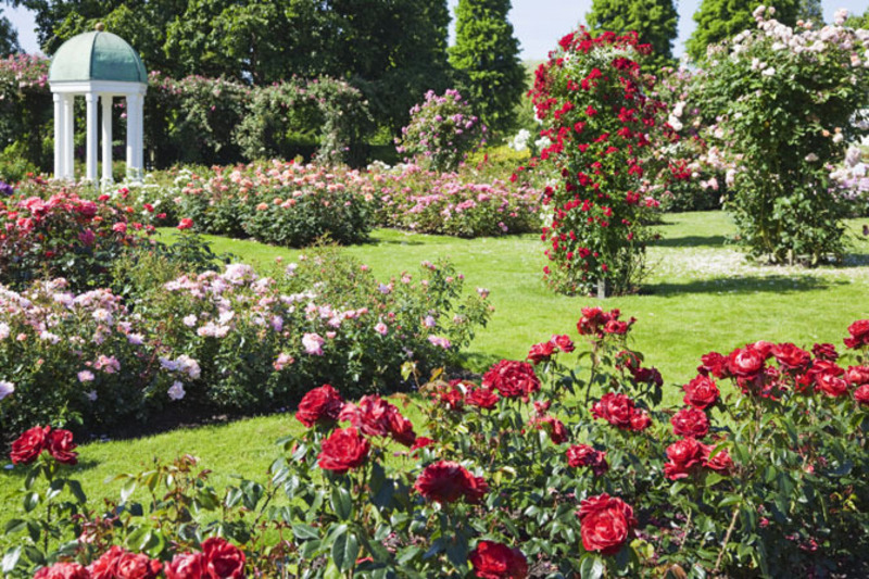 garden design ideas roses photo - 4