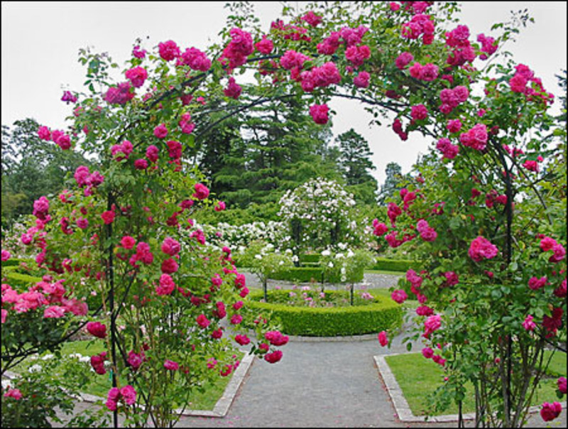 garden design ideas roses photo - 6