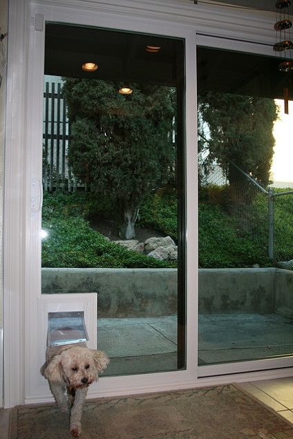 glass dog door photo - 6