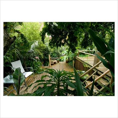 Jungle Garden Design Ideas Photo