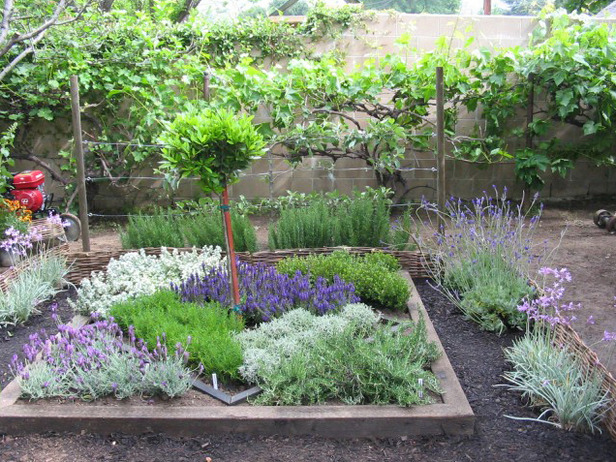 knot garden design ideas photo - 1