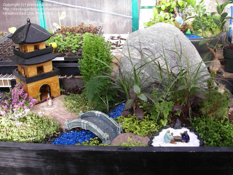 mini japanese garden design ideas photo - 1