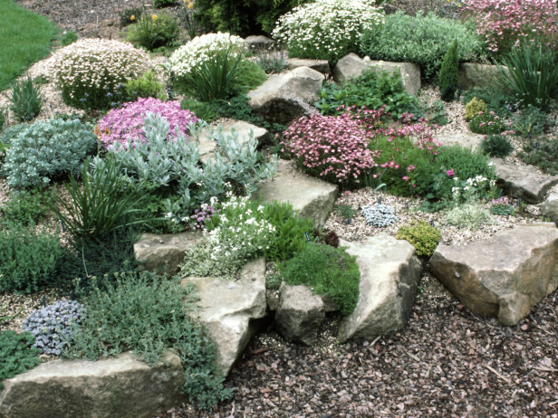 plants and shrubs for rock gardens photo - 2