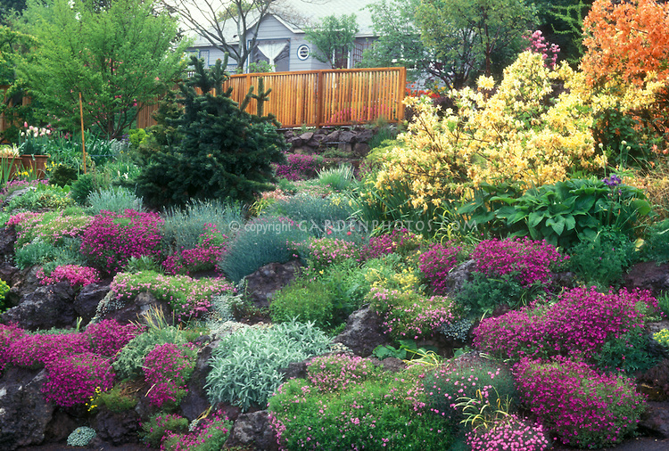 plants and shrubs for rock gardens photo - 6