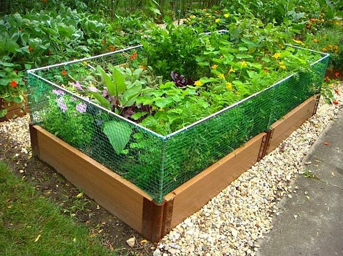 Raised Bed Designs Vegetable Gardens markcastroco