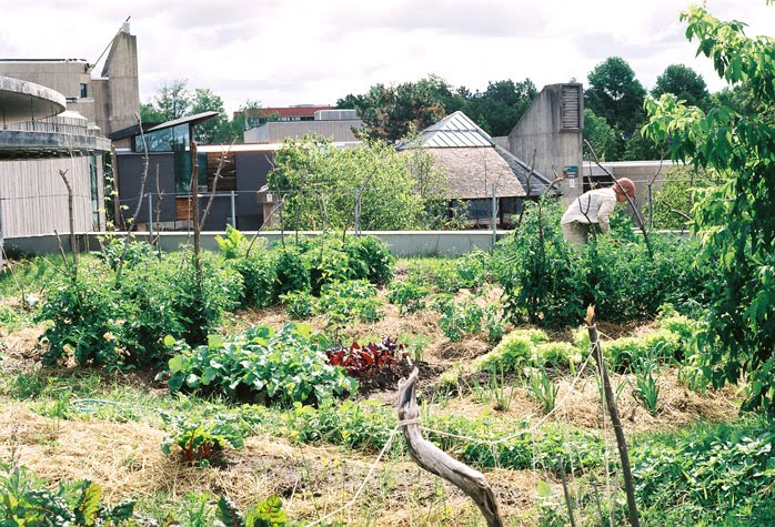 Rooftop Vegetable Garden Images Reverse Search - Rooftop vegetable garden ideas