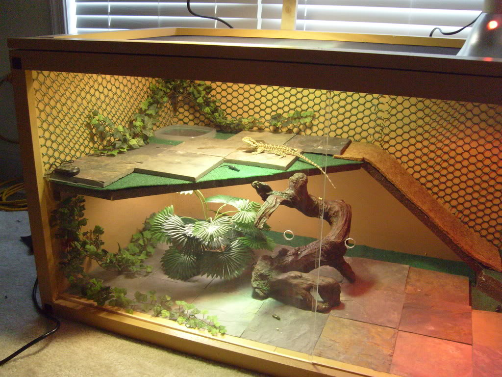 slate tiles for bearded dragons photo - 4