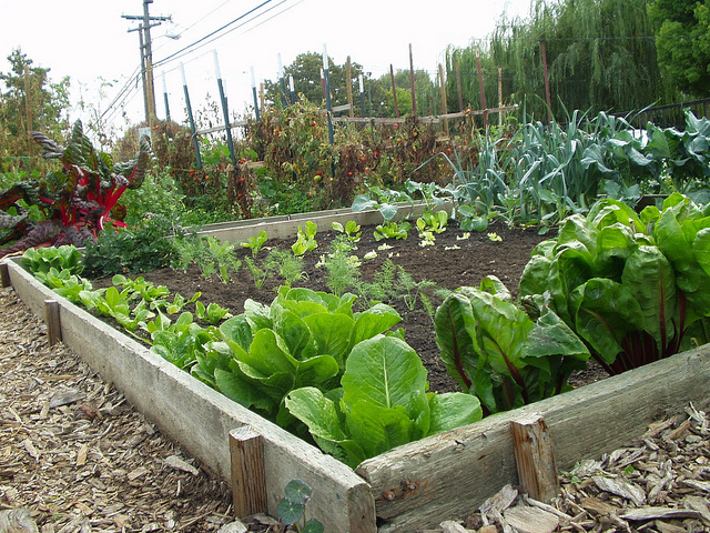 small easy vegetable garden photo - 2