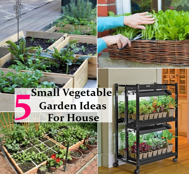 small easy vegetable garden photo - 3