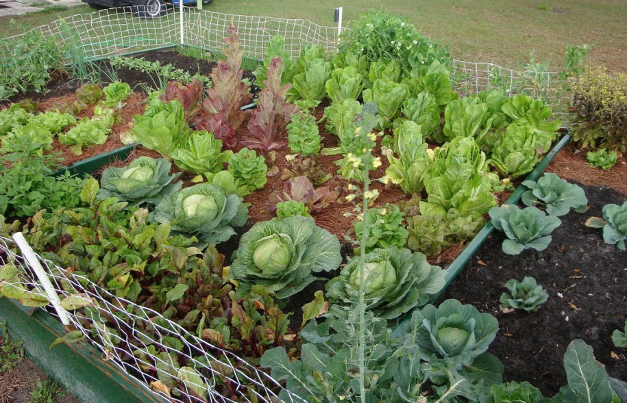 small easy vegetable garden photo - 6
