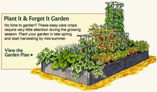 urban vegetable garden layout photo - 1