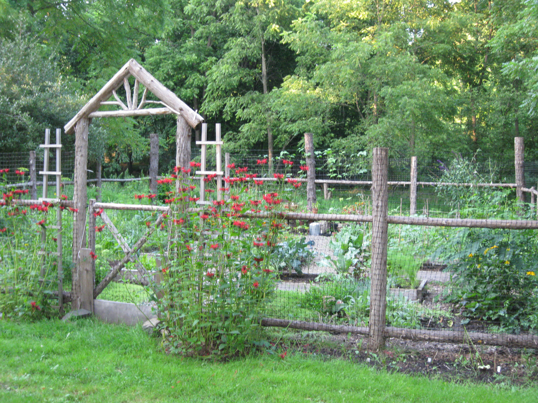 vegetable garden along fence photo - 1