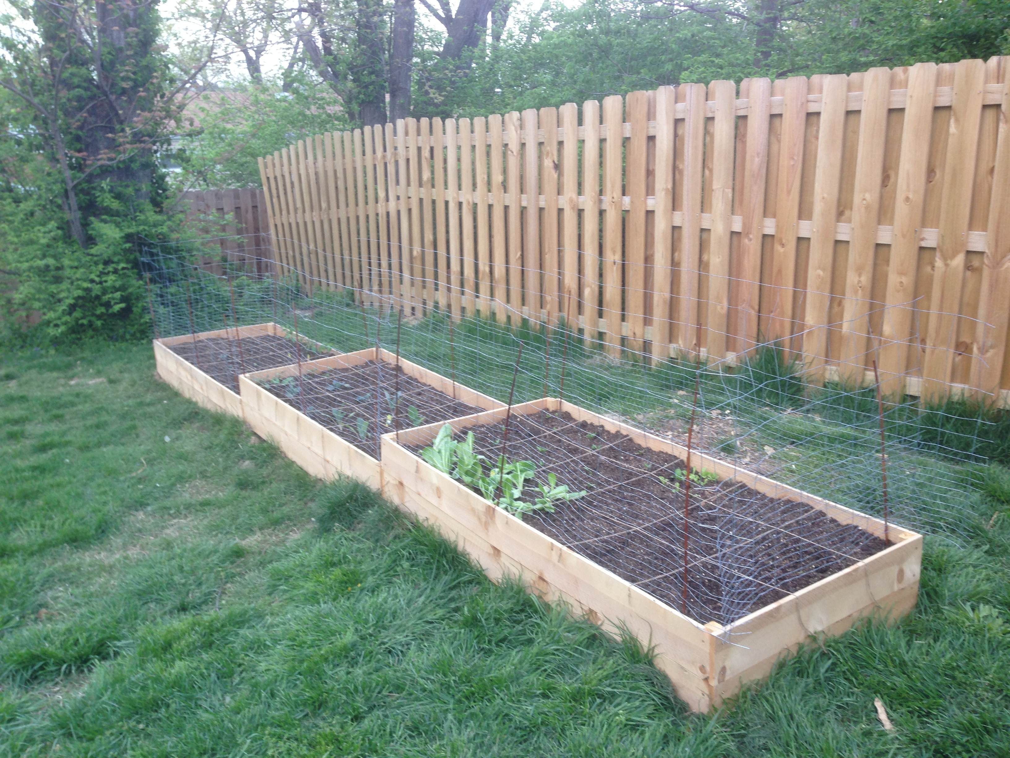 vegetable garden along fence photo - 2