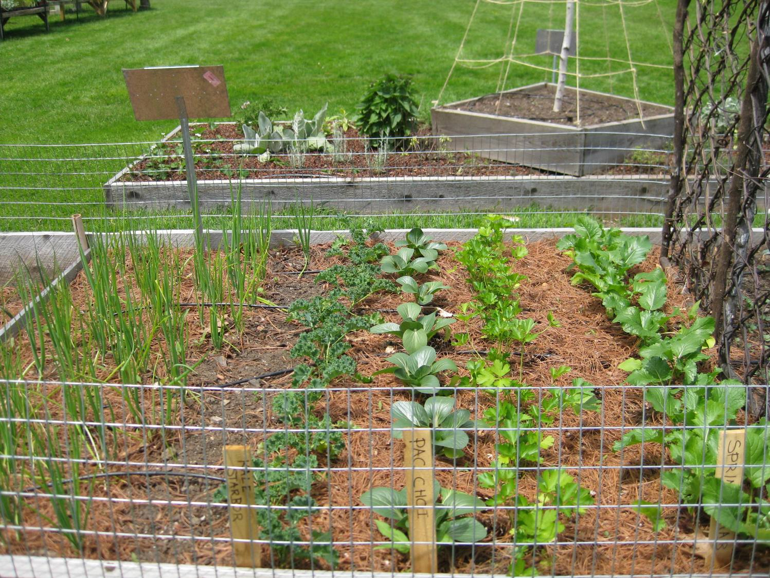 vegetable garden along fence photo - 3