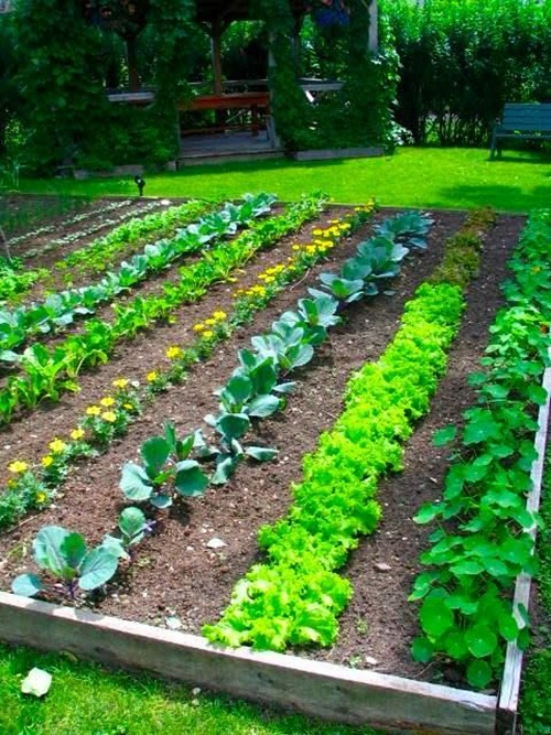vegetable garden borders photo - 2