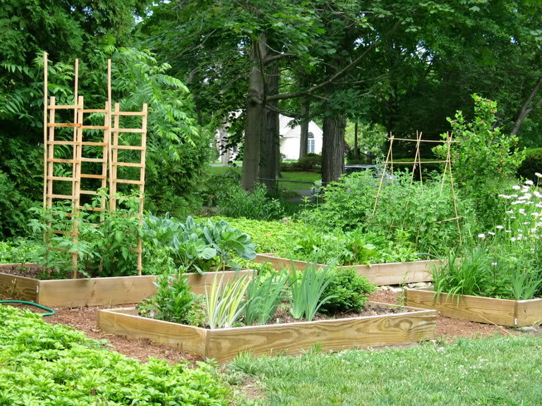 vegetable garden borders photo - 3