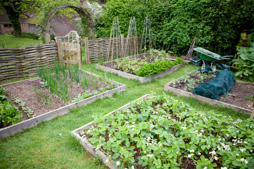 vegetable garden box ideas photo - 5