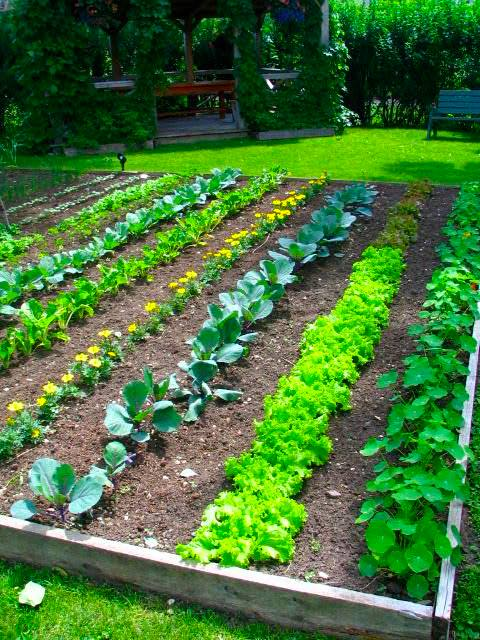 vegetable garden design ideas backyard photo - 3