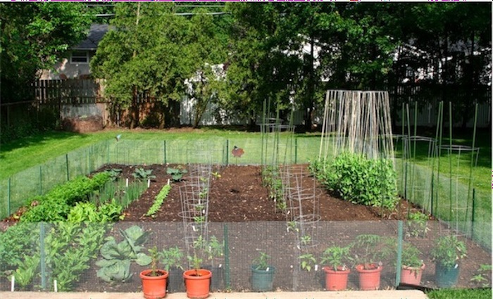 vegetable garden design ideas backyard photo - 6