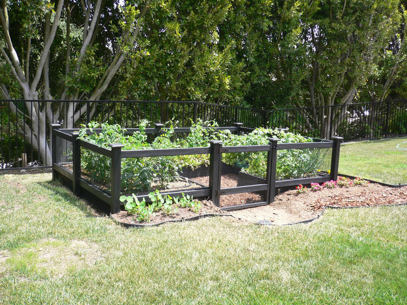 vegetable garden fence photo - 2
