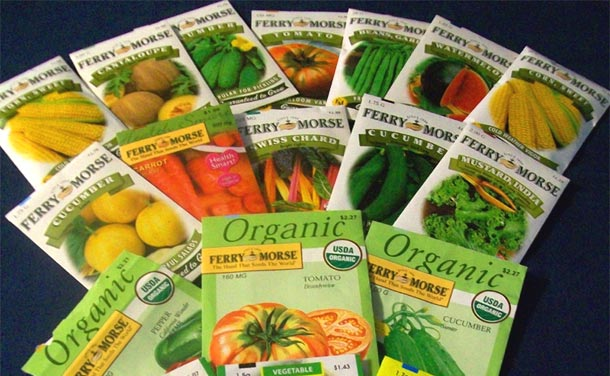 vegetable garden seeds photo - 1