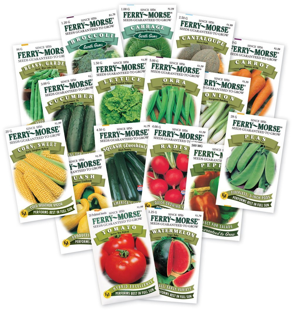 vegetable garden seeds photo - 4