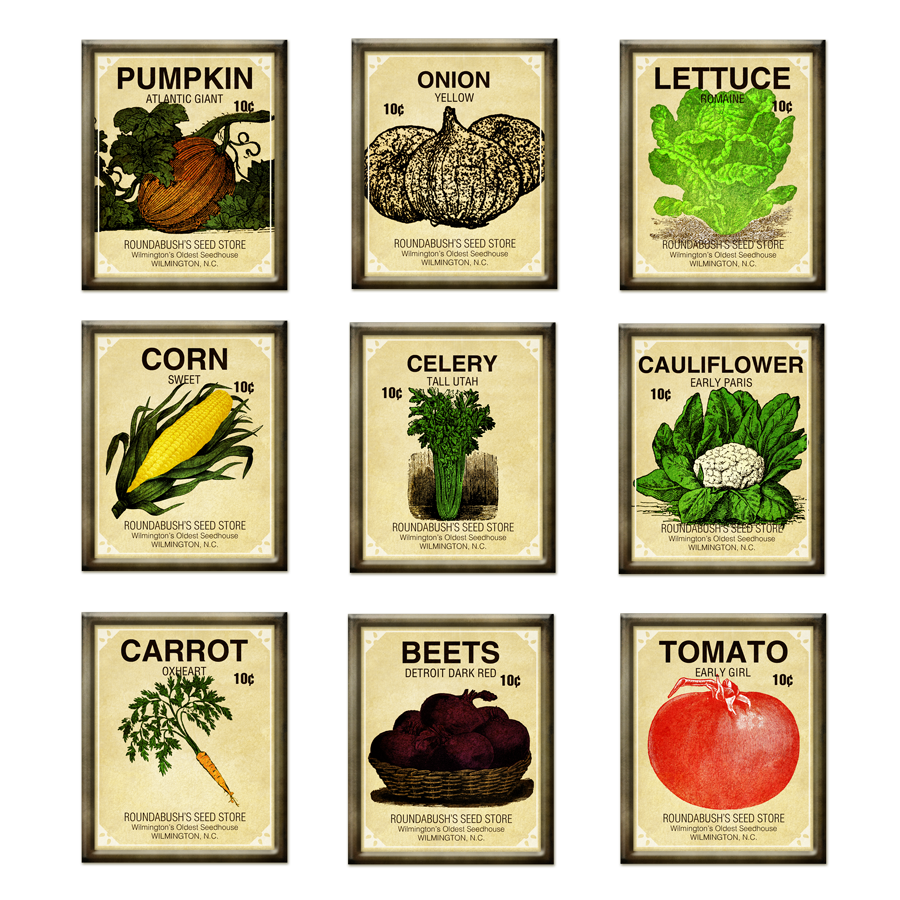vegetable garden seeds photo - 5