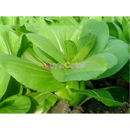 vegetable garden seeds photo - 6