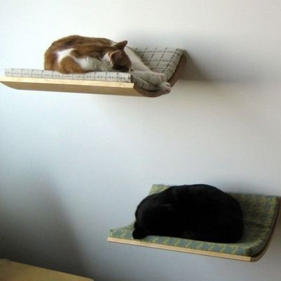 wall mounted shelves for cats photo - 4