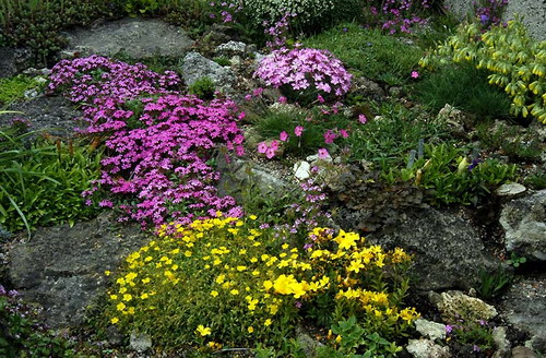 what are good plants for rock gardens photo - 4